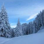 2011-01-23_stockli_1