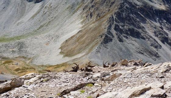 Monte Maniglia – 3000er Wanderberg
